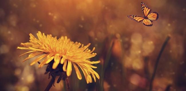 Het vlindereffect